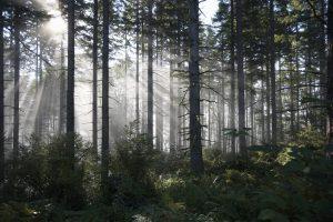 real trees ThinkstockPhotos-sb10065242d-001