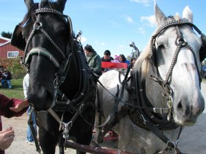 Applefest Brat Fry @ Oneida Cultural Heritage Grounds